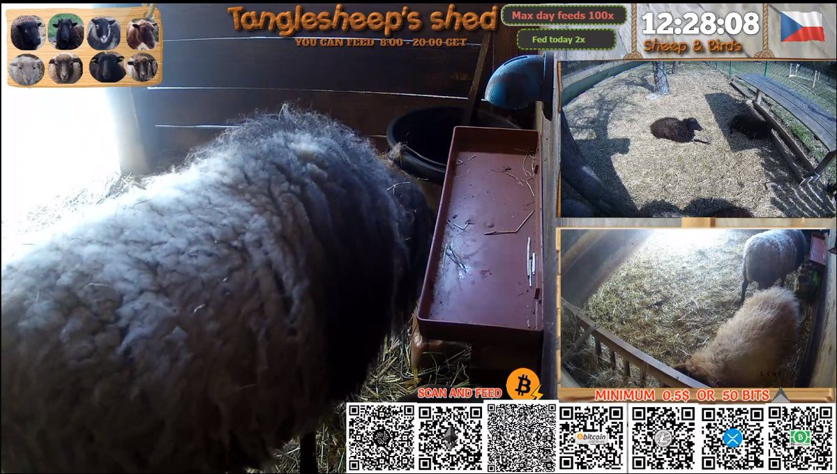 If you are bored in this hard times , you can relax by watching  and  feeding sheep with #Bitcoin #Litecoin #ETH #BitcoinCash #IOTA . Hope you are doing well.pic.twitter.com/xGZA9POAM0