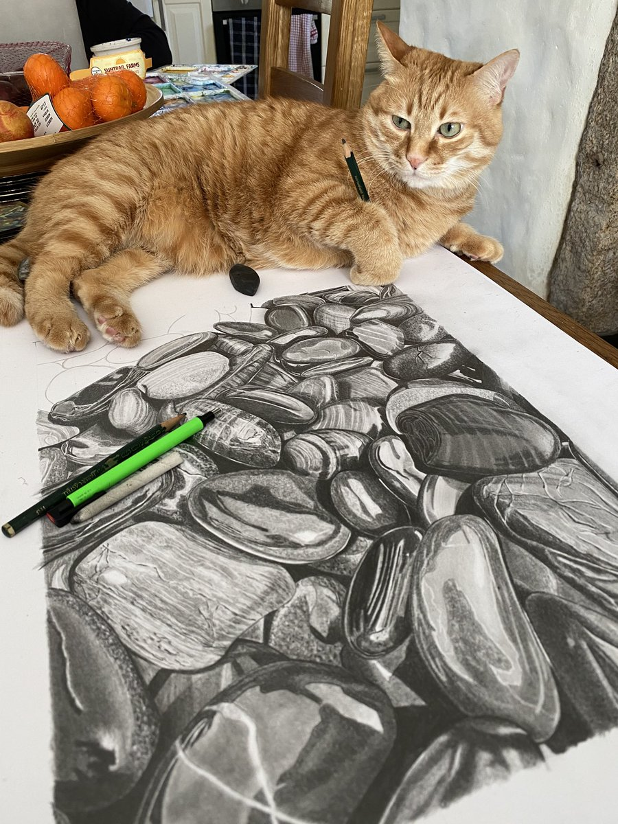 The secrets out - I don't do any of the #pencildrawings I show - the cat (Biscuit) is responsible for everything #cat #artistpic.twitter.com/Fpqa6fyu3t