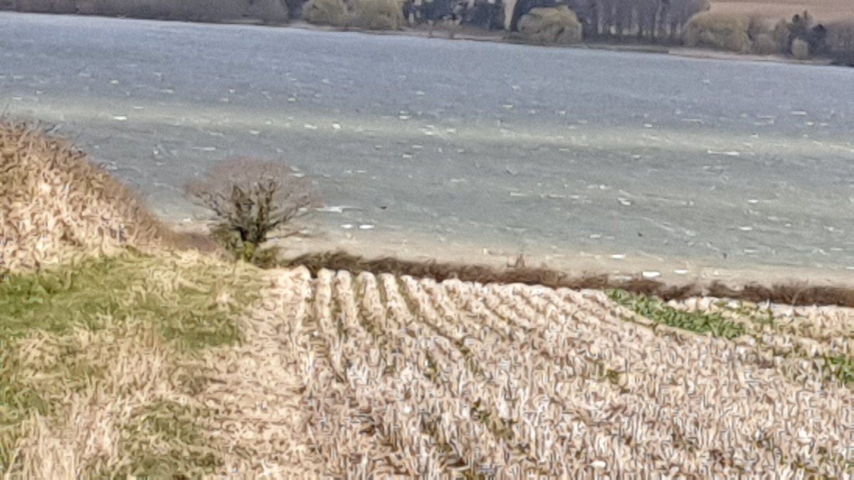 Went for my 3 mile walk this morning. Very windy. In fact..... The wind whipped up the waves so loud, but didn't see rifles being turned into silver on the (Rutland / Leicestershire) borders. pic.twitter.com/BE12Nc5Nak