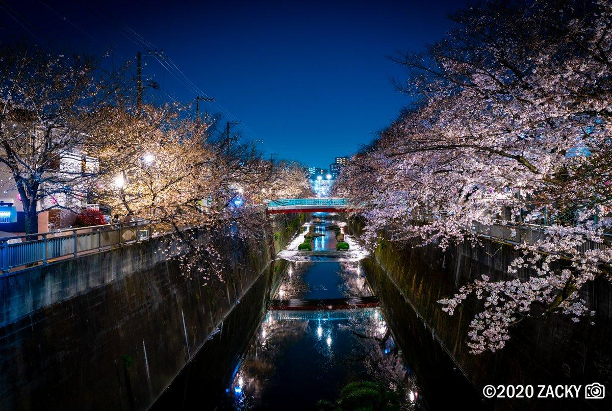 #桜 #tokyo #板橋 pic.twitter.com/yuPbxlLYK8