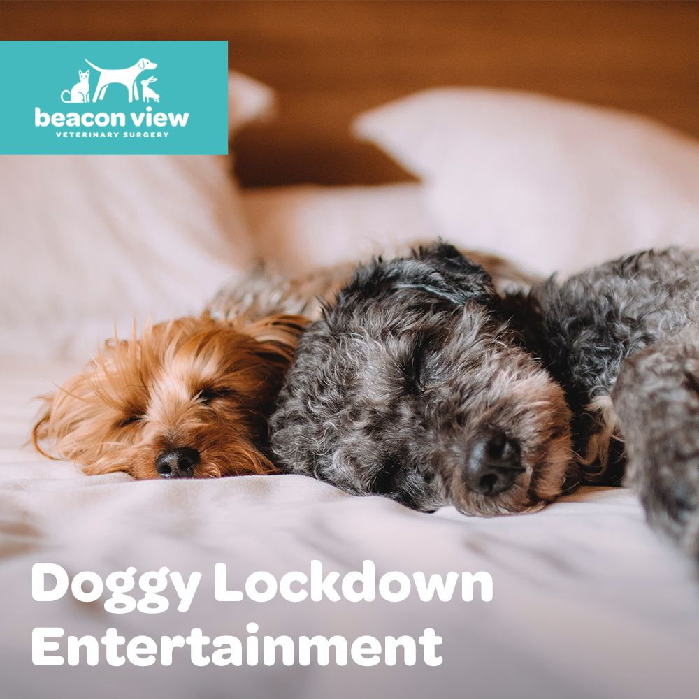 Being stuck at home is disappointing for both you and your dog. We all know that an active dog is a happy dog. Check out our latest blog post for a few tips for how you can keep your dog entertained indoors: https://buff.ly/2xtPnjBpic.twitter.com/2YlcpFlgeF