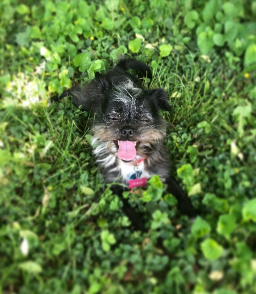 Happy Sun-dog everyone! @alinark16's baby Rhozi loves when her mom takes her home to VT! So much space to run around! . . #sundog #dogsofinstagram #dogstagram #dogs #muttsofinstagram #mutt #petsofinstagram #columbia #columbiauniversity #vermont #petstagr… https://instagr.am/p/B-UxPYRl5wL/pic.twitter.com/FEh00Ex79v