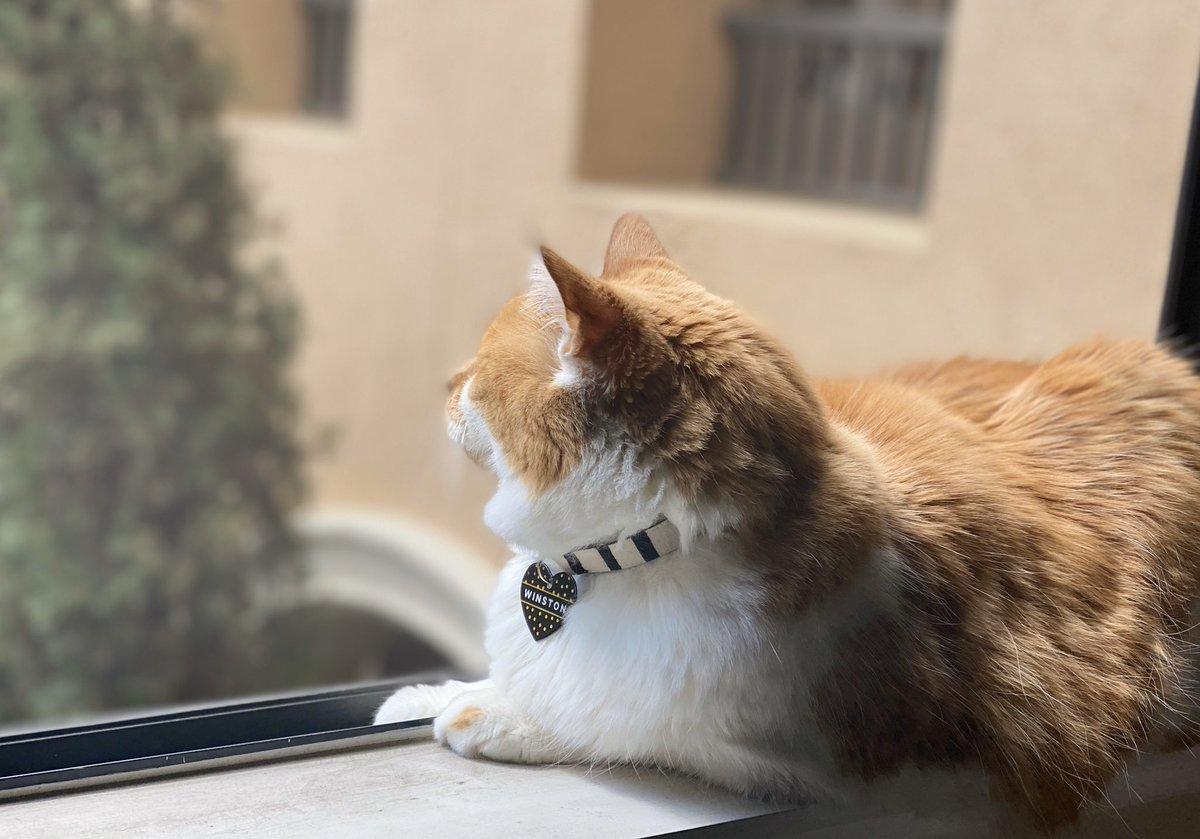 Bird watchin'  #cats #SundayFunday #cute #gatospic.twitter.com/NANNdjOTzv