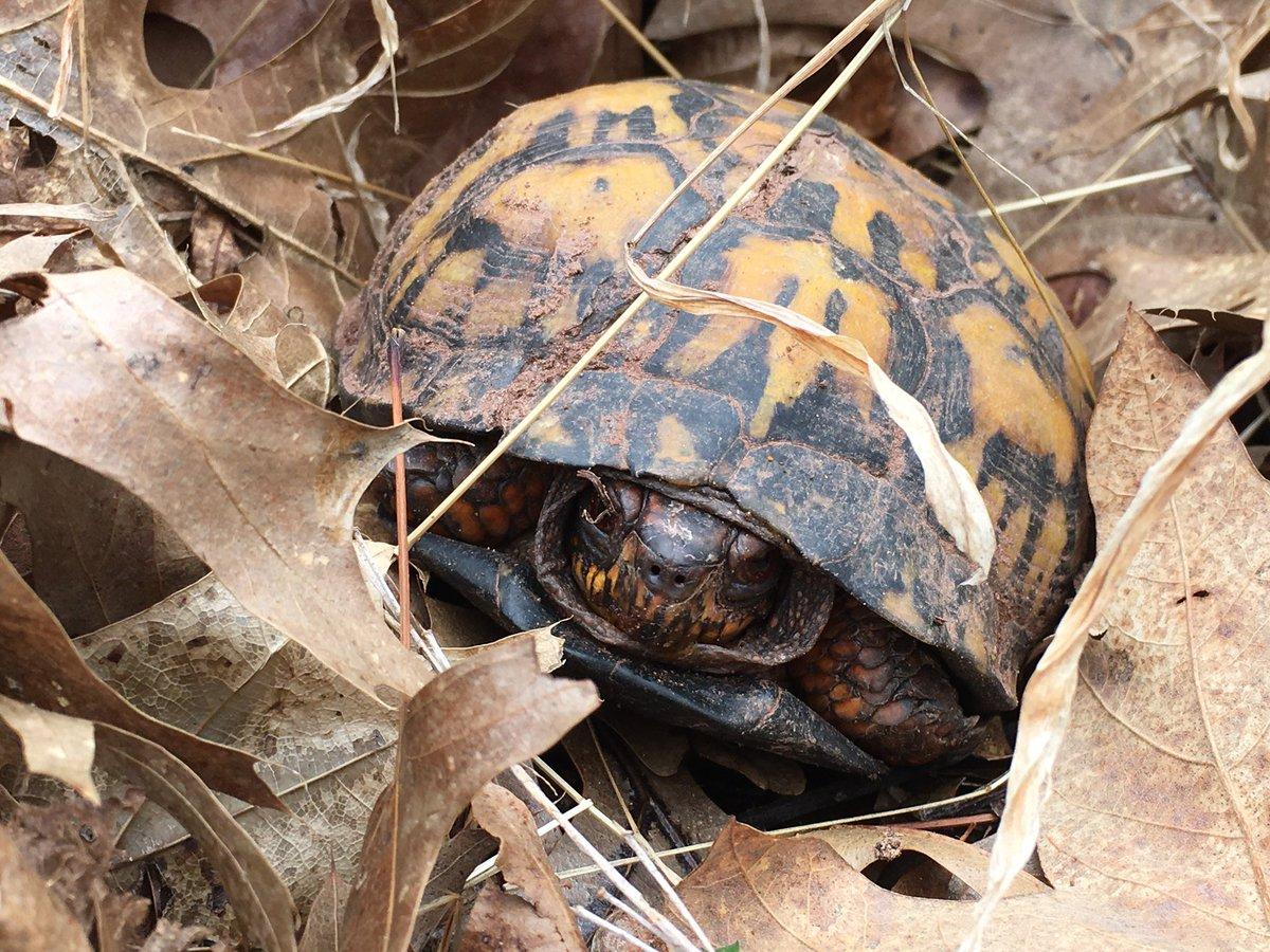 "The grumpy ""I just woke up"" turtle face #hiking"