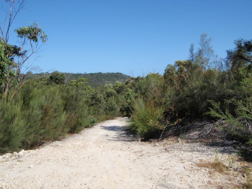 Currie Rd Track (4.5km) http://bit.ly/2o3Xuwd #trailhikingaust #trailhiking #adventure #hiking #bushwalking #lovehiking #walking #hikinglife #letsgohiking #hikingadventures #outdoors #australia