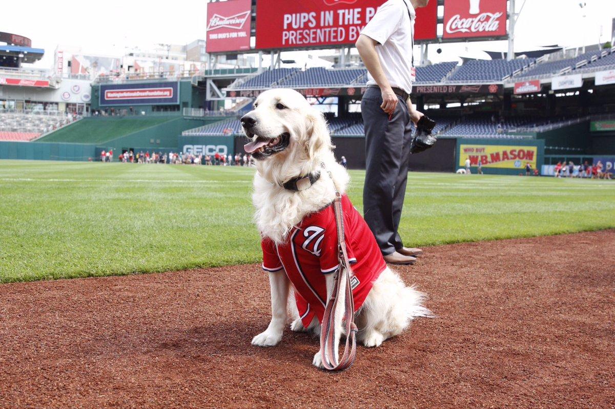 Put me in Coach! #Ice #dogsneedbaseballtoo @BatdogRookie @finnthebatdog 🐶⚾️🐾❤️