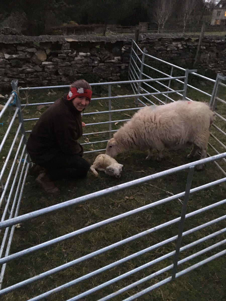 What a lamb  she has gotta come home tho due to the rather large head #texel #lamb #cotswolds pic.twitter.com/TMuAbGjv8O