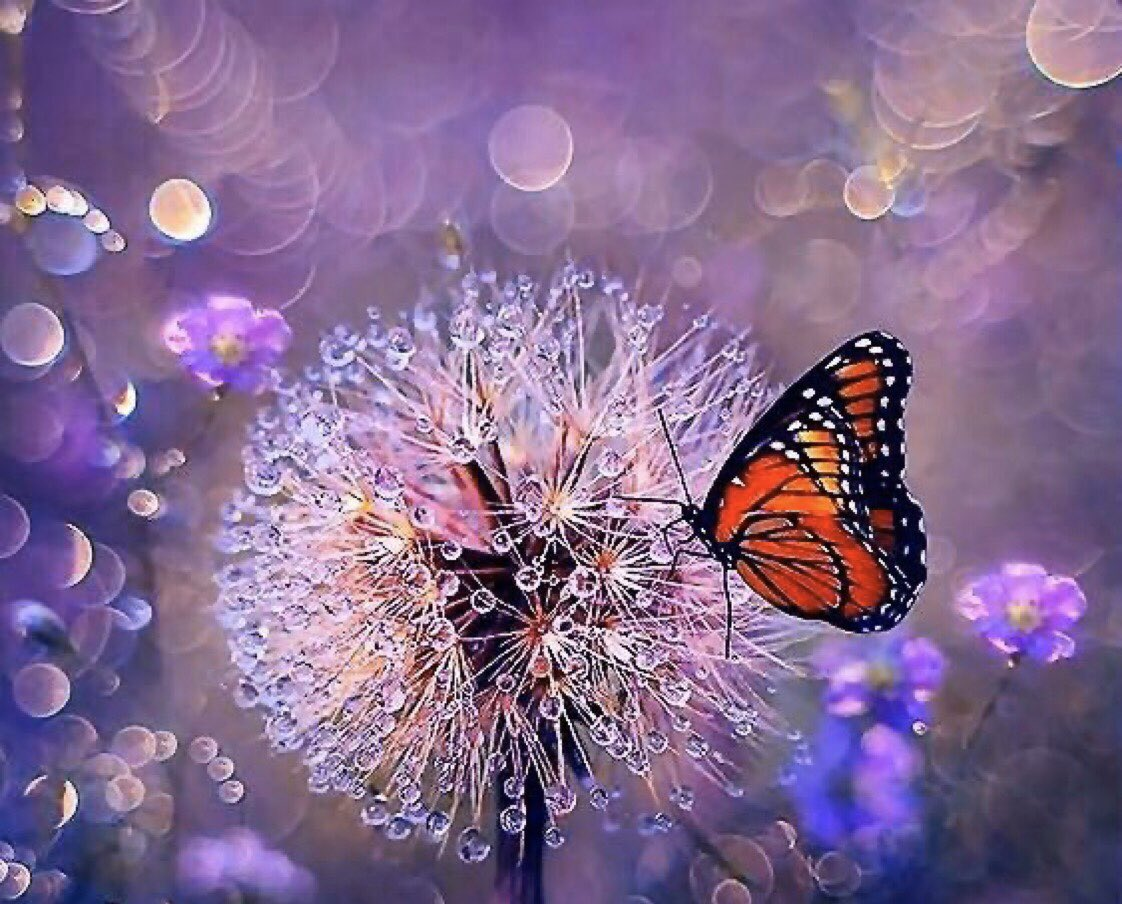 ❦This day will never spring again; notice something of beauty in this moment, not to capture it, but to live in it's presence with exuberance. ~Anne Scottlin #sundayinspiration #sundaythoughts #morning #motivation #coach #pic #anonpic.twitter.com/cwwHIJADV9