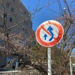 Image for the Tweet beginning: 指導員の森田です☆ ネヤドラもいよいよ桜が咲いてきました(^ ^) ところでこの標識は覚えていますか??黄色の中央線も同じ意味ですよ\(^-^ ) #ネヤドラ #桜 #標識 #春