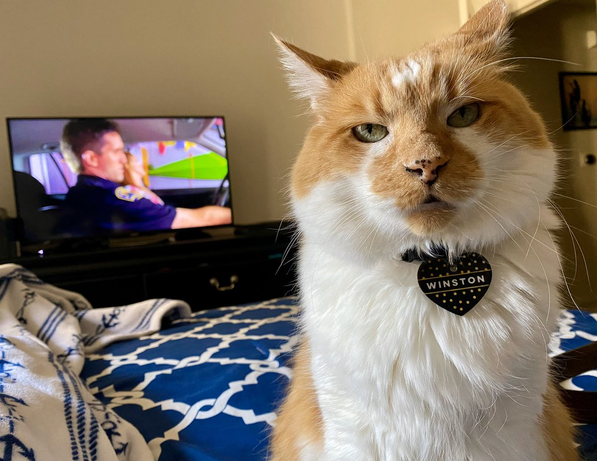 Winston's still feelin those #weekend vibes  #CatsofTwitter #cats #cutepic.twitter.com/kTa7Et93zt