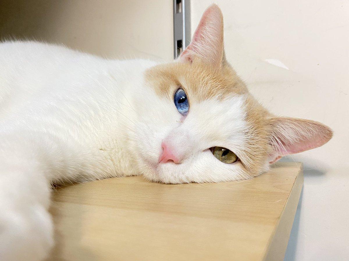: Why is it Monday again.. *sigh* #肥米 #癒される #吸貓 #cat #MondayMotivatonpic.twitter.com/XZrcjjZsIr
