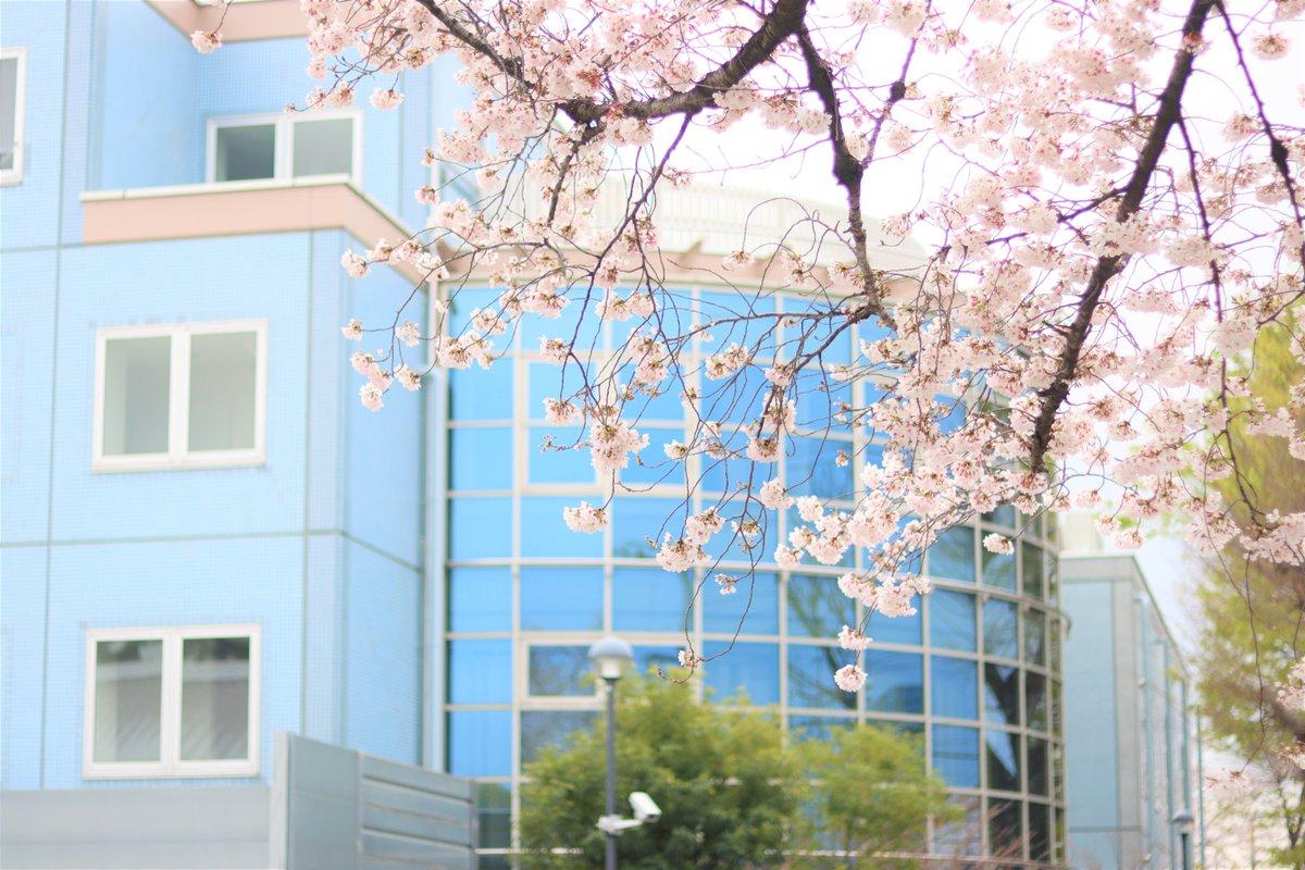 大学 高千穂