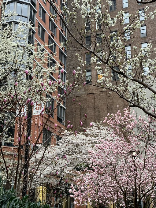 's Media: And yet she persisted. #mothernature #nycspring https://t.co/hQWickGXyA