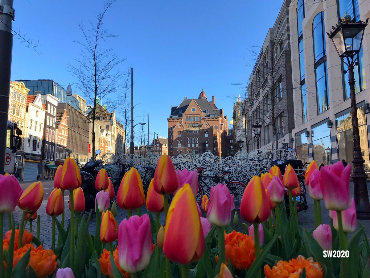 Despite the corona crisis, the Tulip Festival in #Amsterdam will add color to the public space in April. However, some locations are inaccessible due to the circumstances, including the gardens of hotels and museums. pic.twitter.com/RiZjI9whSr