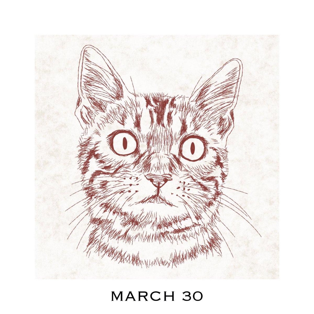 猫好きイラストレーター 365cat Art 3月30日 ご飯作るにゃっ 猫の似顔絵 動物のイラスト 描いてます インスタも見て T Co 1lhrrxj5af 猫カレンダー 365catart 猫好きさんと繋がりたい 猫似顔絵 猫イラスト 猫イラストレーター 猫