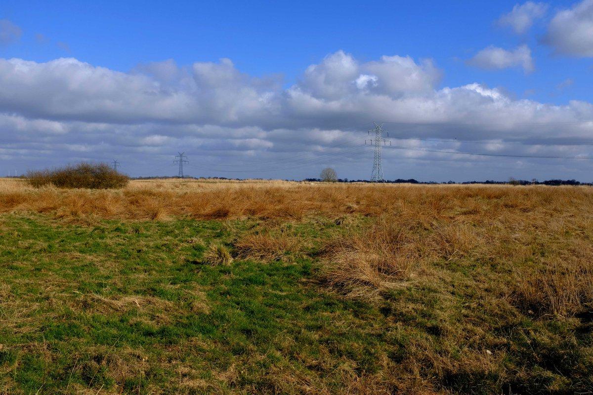 Only the #highvoltage line disturbs #nature a bit. #fotografie  #ostfrieslandfotos #heimat @Ostfriesland_px #picture #PictureOfTheDay @kunsthalleemden #Ihlow  #NaturePhotography #landscapephotography  websites link:  http://simonswol.depic.twitter.com/GW7ZFsflET
