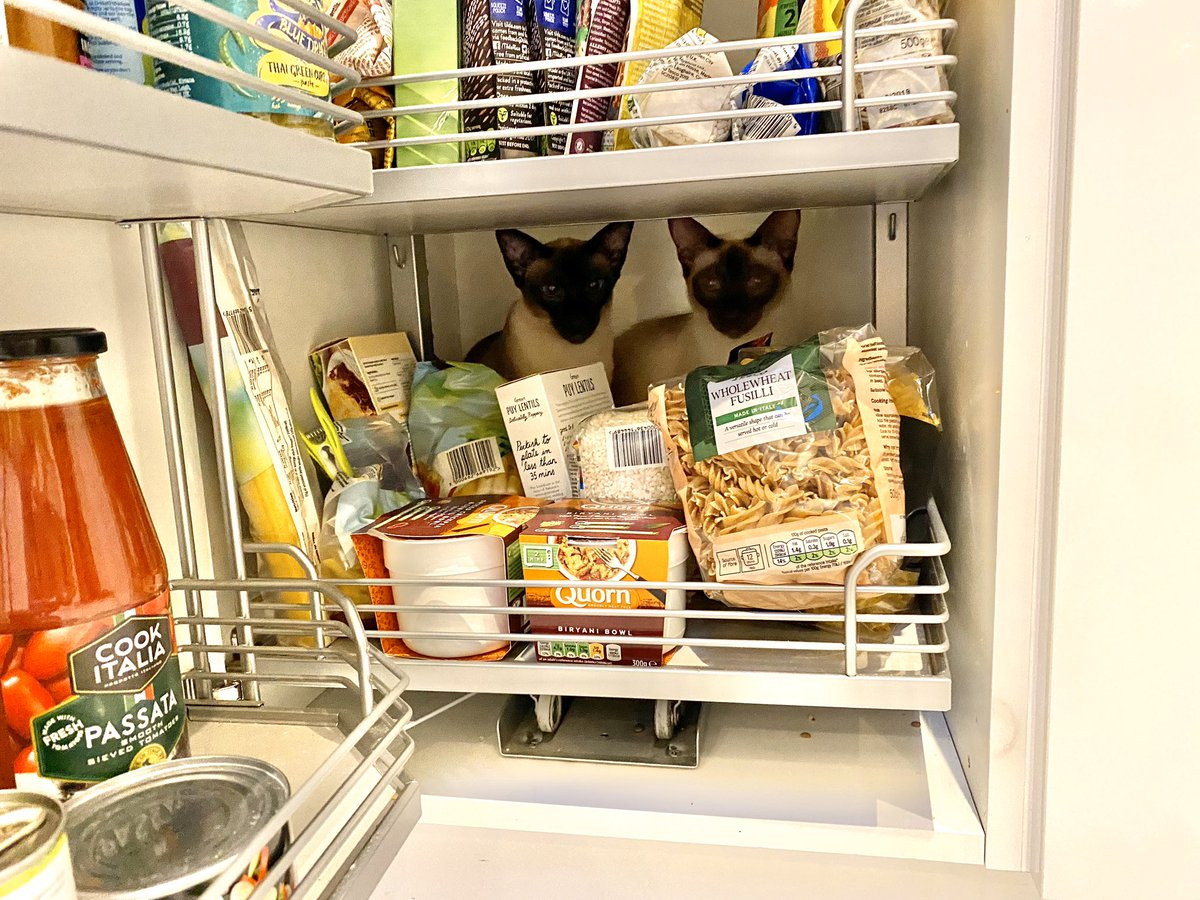 It woz dark again when mum got up today  #BritishSummertime So we got up to nortiness while breakfast was being served.  Bet youz can't spot us...  #StealthMeezers #Catoflage #MondayMonkeyness #CatsOfTwitter #Cats pic.twitter.com/81n4YrJbIq