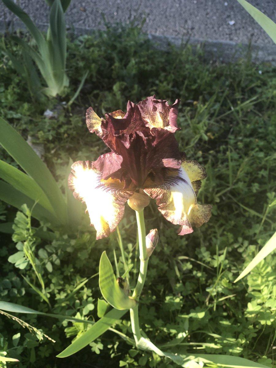 #FlowerReport Berkeley