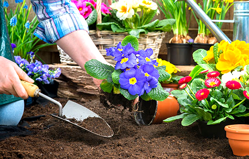Retweet and tag a friend who you think should WIN a Voucher to shop at one of the 4 Plantland Garden Centres (Nurseries) in Pretoria, Gauteng valued at R500.00. Click   Make sure your entry is in it to win it.  #prizes #win #smile #sharethelove