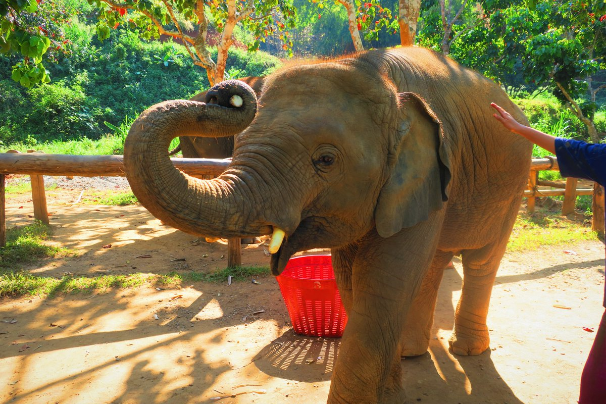 I joined this amazing project at the beginning of 2020 and enjoyed a lot! Beautiful scenary, very very kind staff, delicious food...didn't wanna leave All travellers to Chiang Mai MUST go there!#ElephantGreenHill #ElephantNaturePark #SaveElephantFoundation https://twitter.com/readthecloud/status/1243508063442796544 …pic.twitter.com/geyJMoQpgv