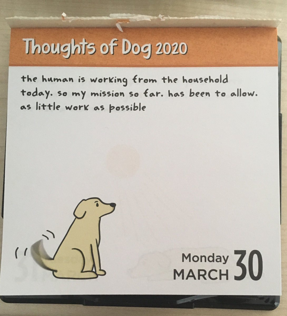 How did @dog_feelings know?!