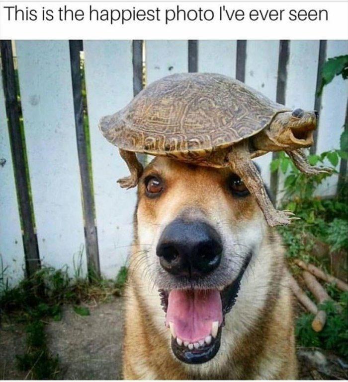 happiest dog ever http://www.dailyhaha.com/_pics/happiest-dog-ever.htm?utm_source=bit.ly&utm_medium=twitter…pic.twitter.com/6saSlp9gcj
