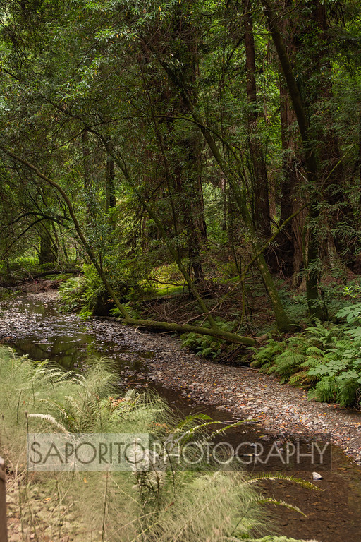 Northern California - Muir Woods#muirwoods #trees #green #water #lushhttps://zcu.io/olcI