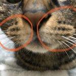 猫の口元にある、あの膨らんだ部分!こんな名前があるって知ってる?