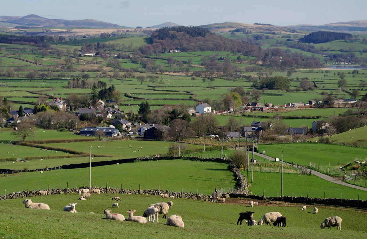 Sheep and lambs near #Llanuwchllyn Llyn Tegid / #Bala #Snowdonia #Wales.  #Photo April 2018.  #SpringTime
