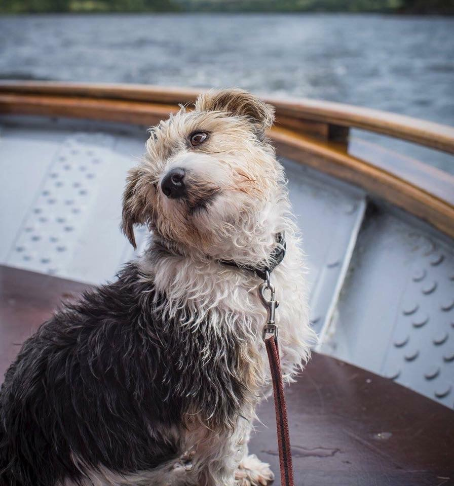Kicking off the week with some of our favourite pooch pics from the archives #staysafe #StayHomeSaveLives #Enjoy #DogsonTwitter #DogsOnBoats - if you have any pictures pls share and we'll RT 📷Jeff Ashton