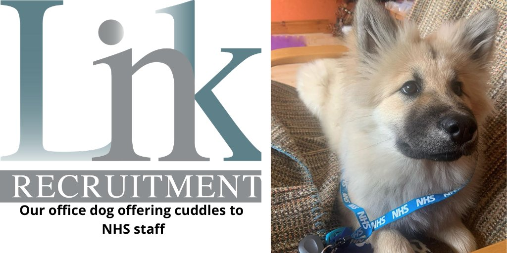 Our Office apprentice is offering cuddles to NHS staff. We are very proud of her.  #keepupthegoodwork #puppy #officedog #recrutiment #mondaymotivation