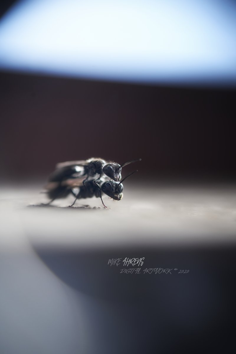 More time for things ... #nature #insects #time #thoughts #makropic.twitter.com/mWVuwwYGlh