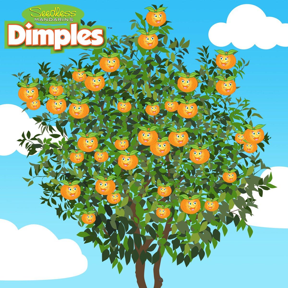 It's DIMPLES season!  #dimples #mandarins #mandarinoranges #sweet #season #goldnuggets #tasty #orange #fresh #fruit