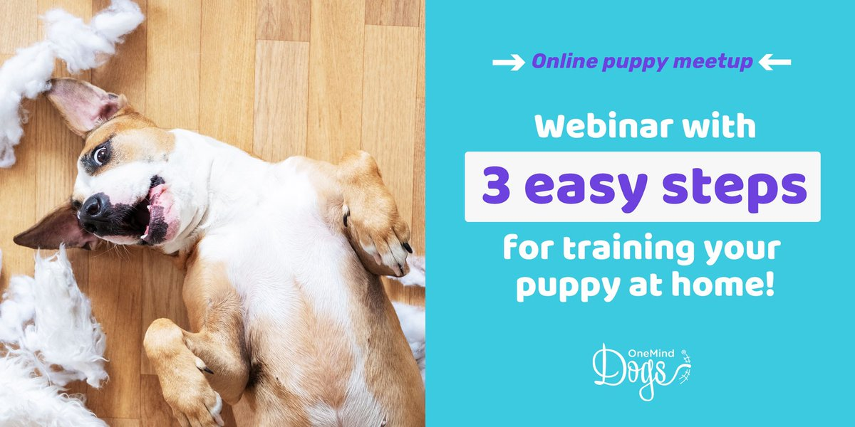 Onemind Dogs On Twitter Free Of Charge Puppy Training Webinar For All New Puppy Owners Now When Staying At Home The Puppy Socialisation Is Not That Easy To Do Or May