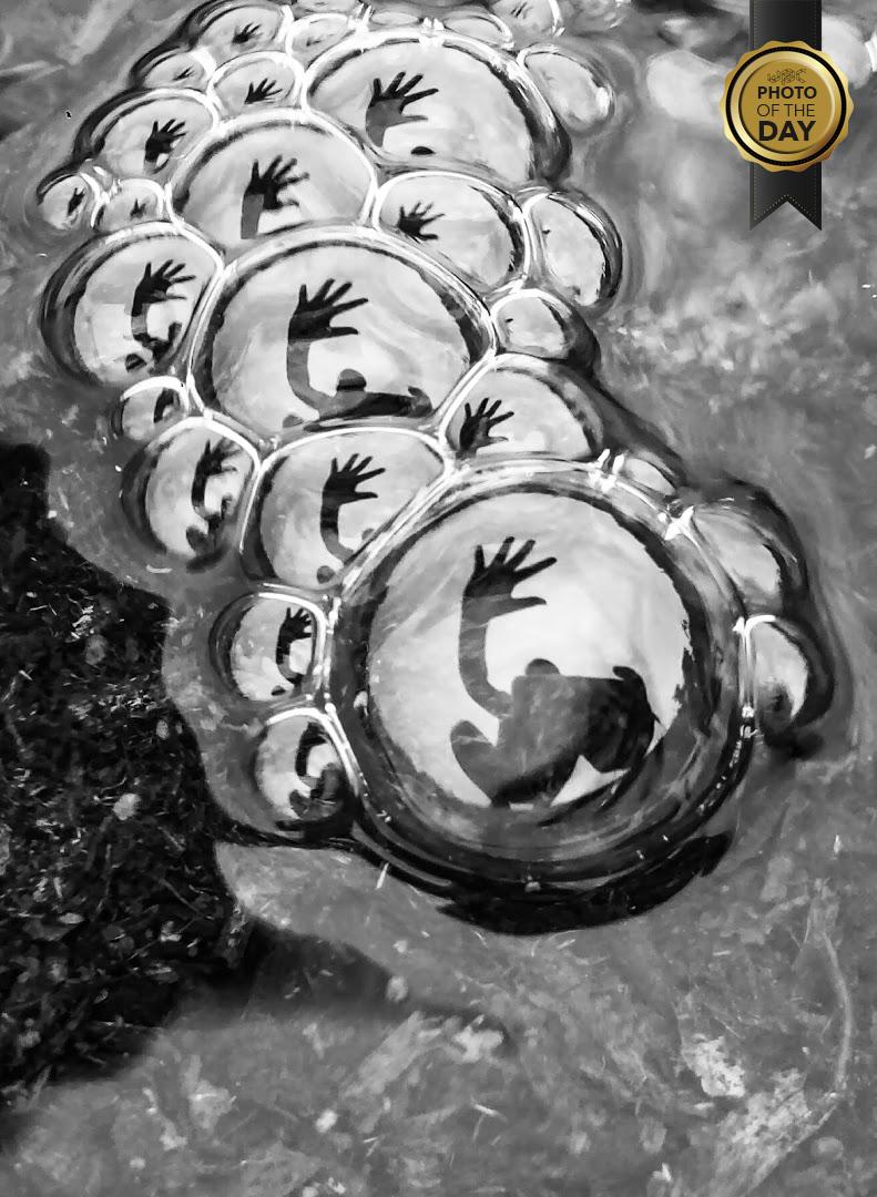 Check out the Photo of the Day by Rahul Gupta     #wpc #worldphotographersclub #photography #pov #amazingangle #photographers #beautiful #photooftheday #creativity #composition #reflection