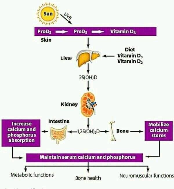 """ Vitamin D ""pic.twitter.com/cN37QBKmgH"