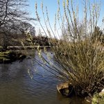 Image for the Tweet beginning: Spring comes to #IlkleyMoor Pussy Willow