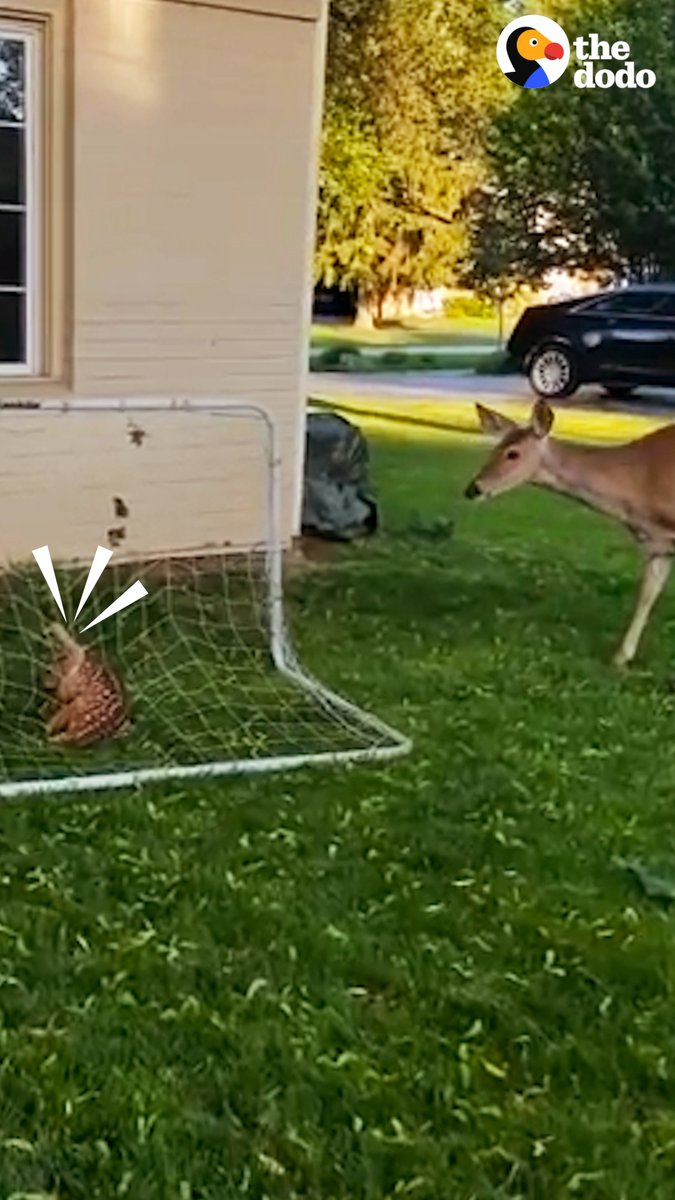 This deer mom's reaction when she's reunited with her baby ❤️