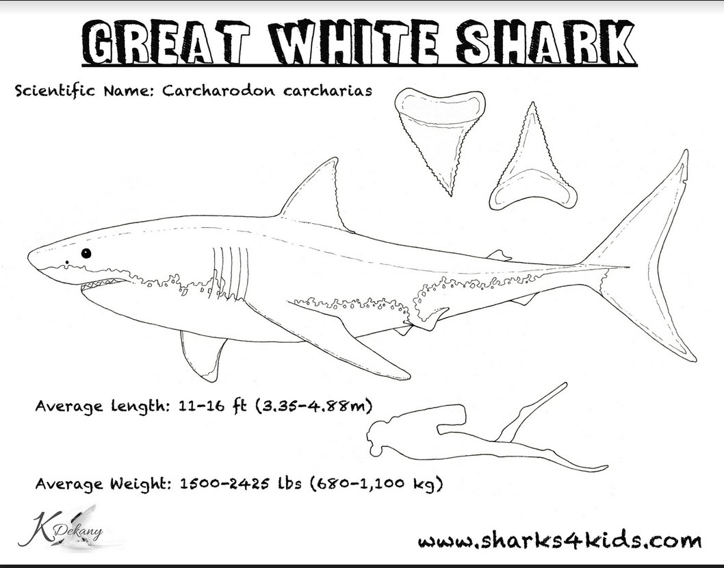 Your 7 y.o might like our #greatwhite coloring sheet !  Free to download https://drive.google.com/file/d/16-obO8IEka_ftZjc1HAoqXLsFZplSNkc/view…pic.twitter.com/2DzgIwdFuN