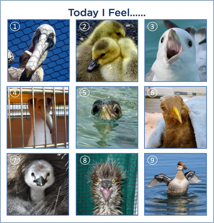 International Bird Rescue On Twitter Today I Feel As Another Week Begins It S A Good Time To Stop And Assess How We Re Doing Internally On A Scale Of Pelican To Fulmar Tell