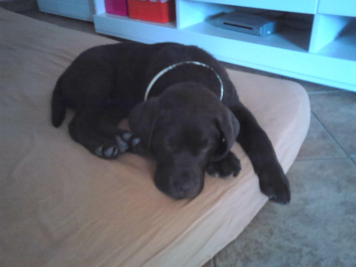 Trust me, he isn't always that quiet.  #dog #dogslifepic.twitter.com/g3xHs3J7Ou