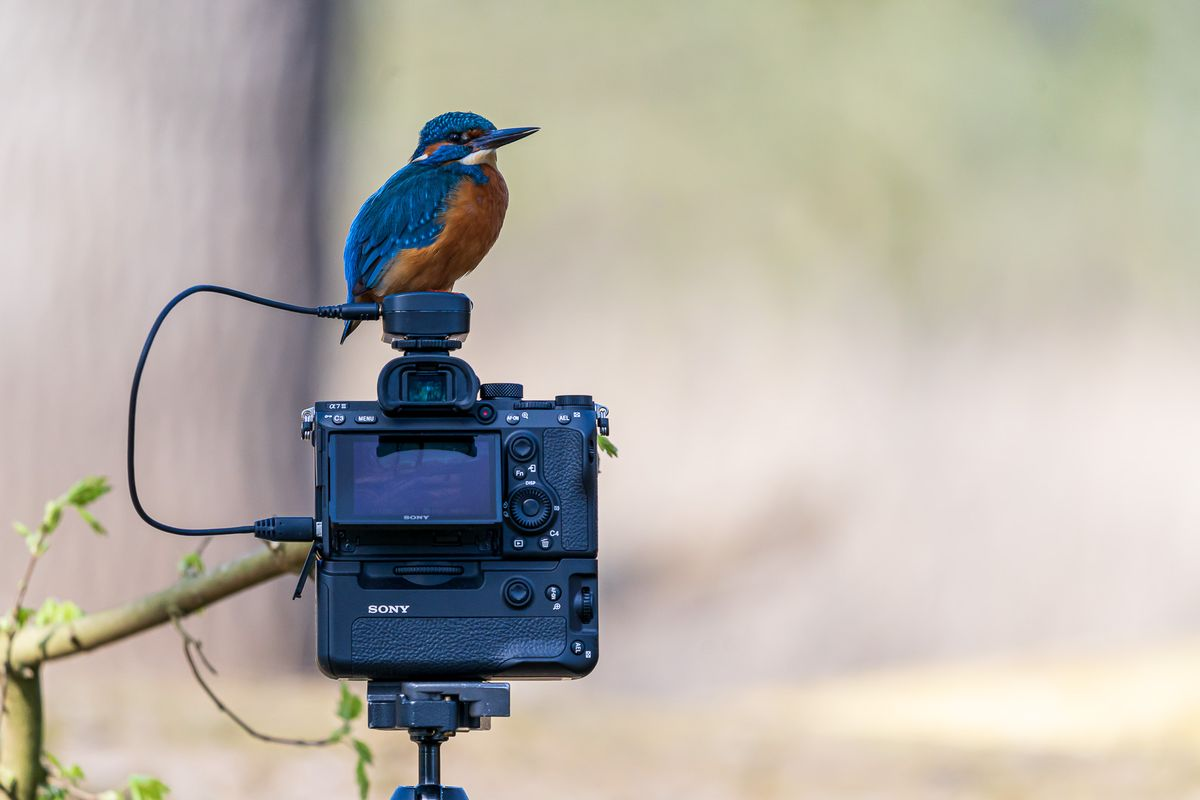 Er zijn van die momenten dat je blij bent dat je een extra camera hebt meegenomen. Fotograaf Roeland Scheeren stuurde ons deze wonderlijke foto, gemaakt met zijn A7III en 200-600 mm supertelezoom G-lens. https://t.co/G5OILAI0yY