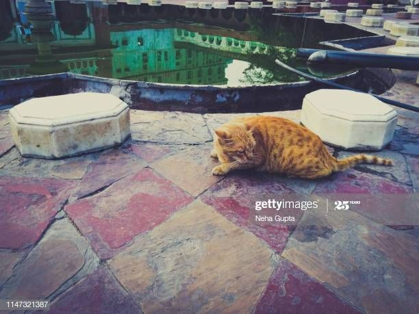 Stray cat at Fatehpuri Masjid - Chandni Chowk, Delhi, India #NewDelhi #incredibleindia #traveltuesday #architecturephotography #photography #gettyimages https://buff.ly/2TJ46Owpic.twitter.com/zs3SnAJQUh