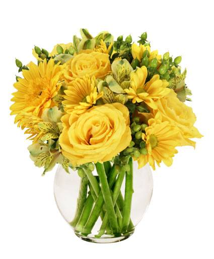 Sunshine Perfection will fill your favourite person's life with rays of sunshine! Order online and show somebody you're thinking about them! https://www.cameronsflowershop.com/product/va01213/sunshine-perfection… #kwawesome #MondayMotivationpic.twitter.com/Jvlooa39Ds