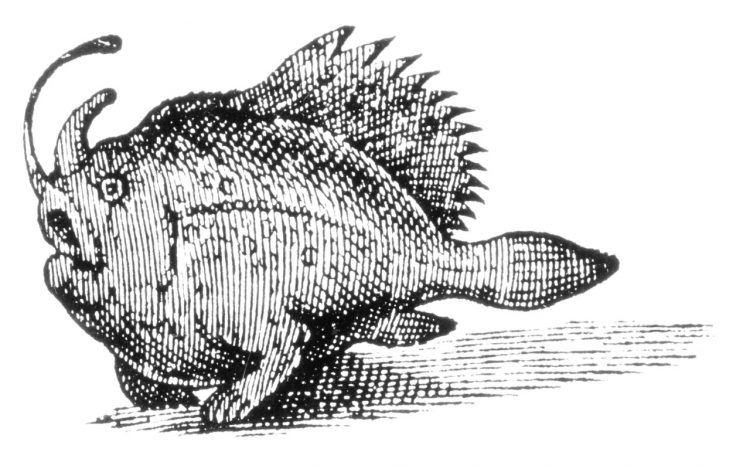 A woodcut of a #Frogfish seen off the coast of Northeastern #Brazil and published in 1633 under the name Pira Vtoewah, forma monstrosa. Artist unknown. #FishArtpic.twitter.com/p9f9KzHAHv
