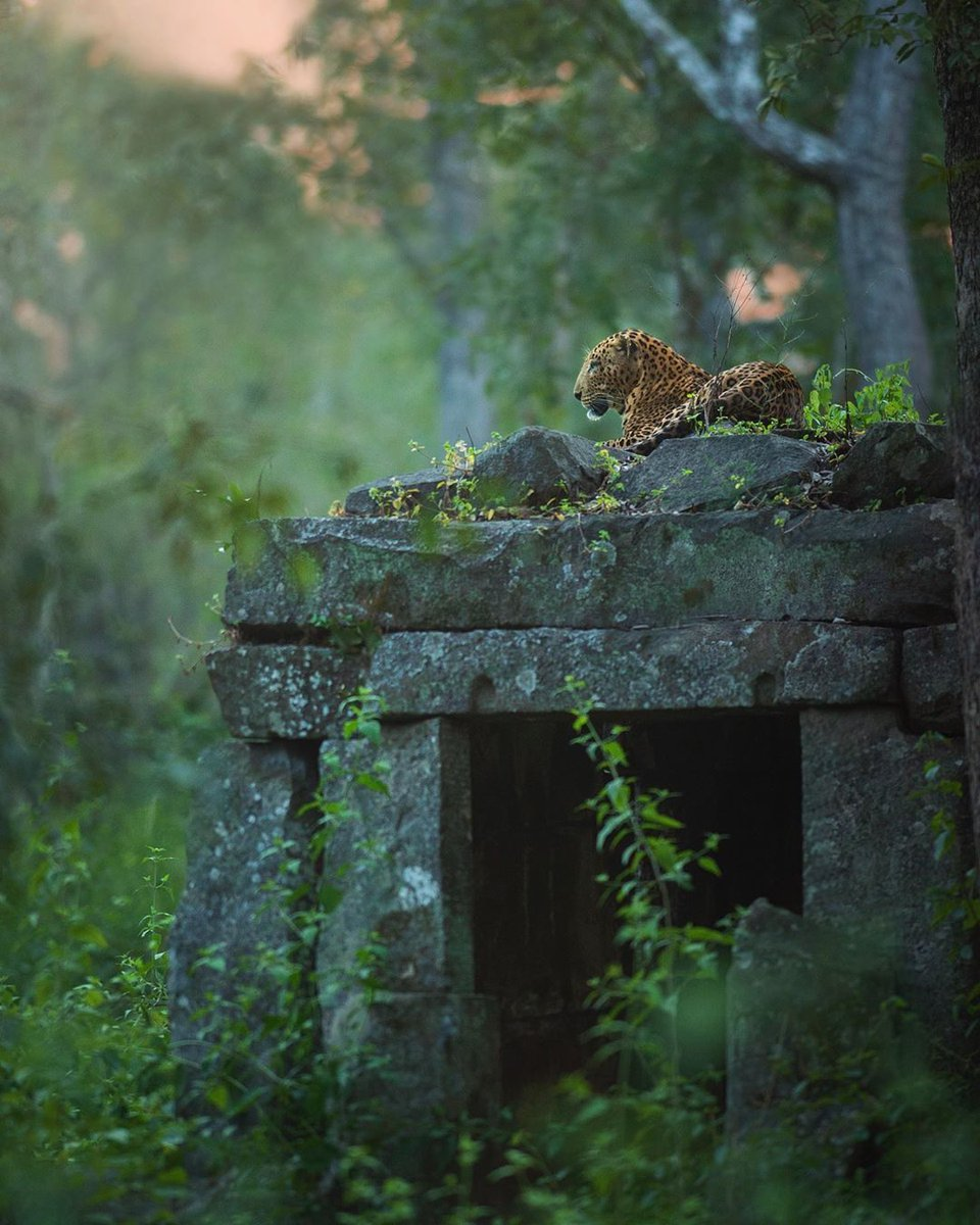 #garden #leaf #leopard #nature #outdoors #stone #tree #wood