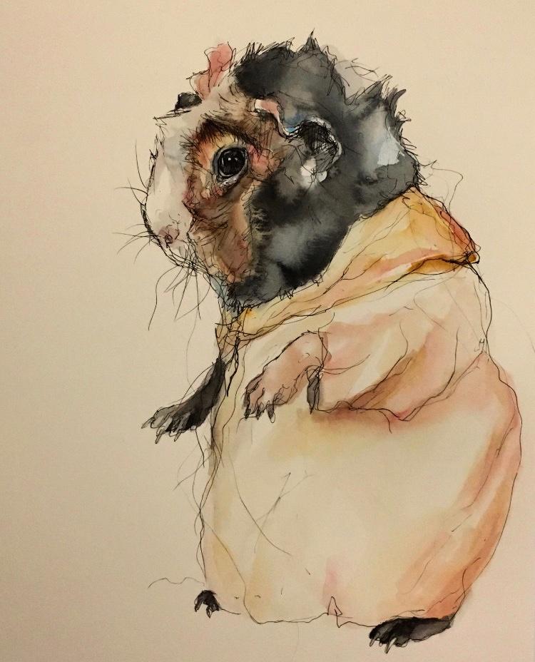 Galil the sensible French Guinea Pig, dressed for the rain    #guineapig #sketch #pen #drawing #illustration #Illustrator #cute #art #MondayMotivaton #painting #Watercolour #penandwatercolourpic.twitter.com/J7jwj2b8w0