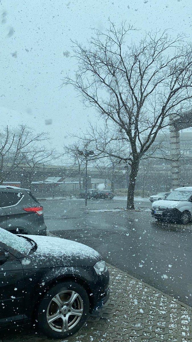 Tijdens de boomcontrole op vliegveld Tegel in Berlijn werden we vandaag verrast door...sneeuw! ❄️🌦 #baumpflege #flughafentegel #berlin #deutschland #bkc