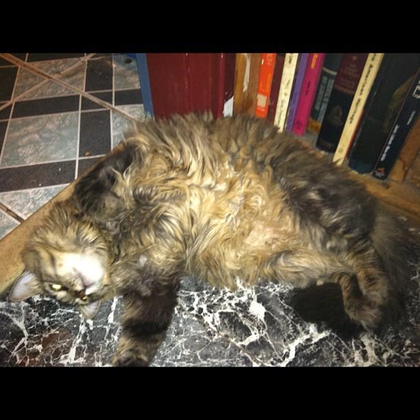This cat has issues 😂  New studio in Midtown/Manhatan:   #cat #nyc