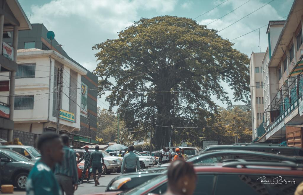 There are many views of the cotton tree in Freetown. It is not only the symbol of the centre of Freetown, but the centre of many important offices in SL. Here's the view from Walpole street 🥰  #RonniesPhotography #SaloneTwitter #eosrp https://t.co/ziKiItvORK